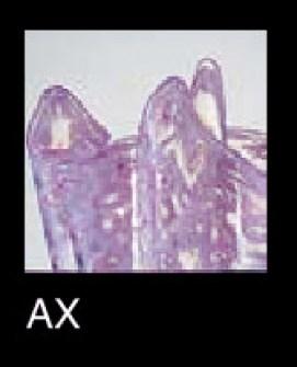 Plafoniera La Murrina Macrame R50 rosa, sconto 50% - 1 pezzo disponibile Image 2